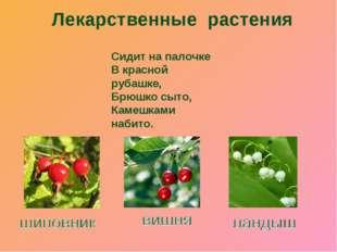 Лекарственные растения Сидит на палочке В красной рубашке, Брюшко сыто, Камеш