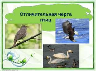 Отличительная черта птиц