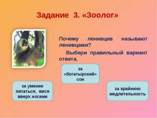 Задание 3. «Зоолог» Почему ленивцев называют ленивцами? Выбери правильный ва