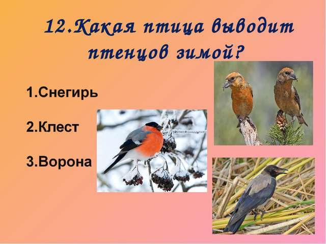12.Какая птица выводит птенцов зимой?