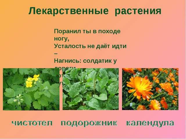 Лекарственные растения Поранил ты в походе ногу, Усталость не даёт идти – Наг...