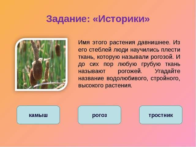 Задание: «Историки» Имя этого растения давнишнее. Из его стеблей люди научил...