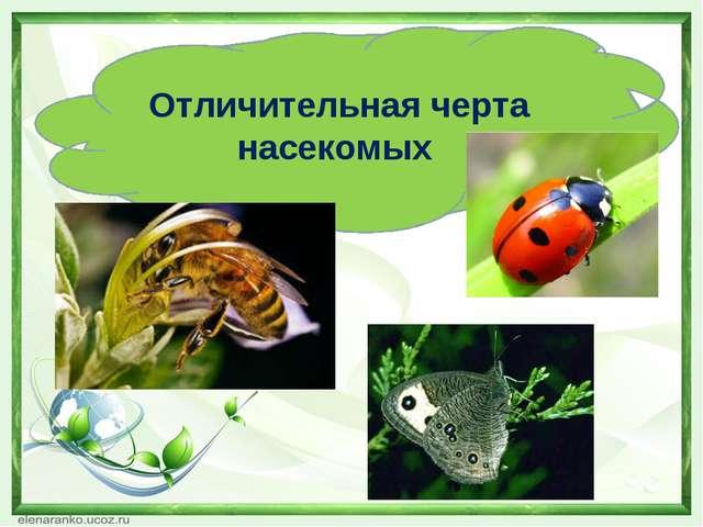 Отличительная черта насекомых