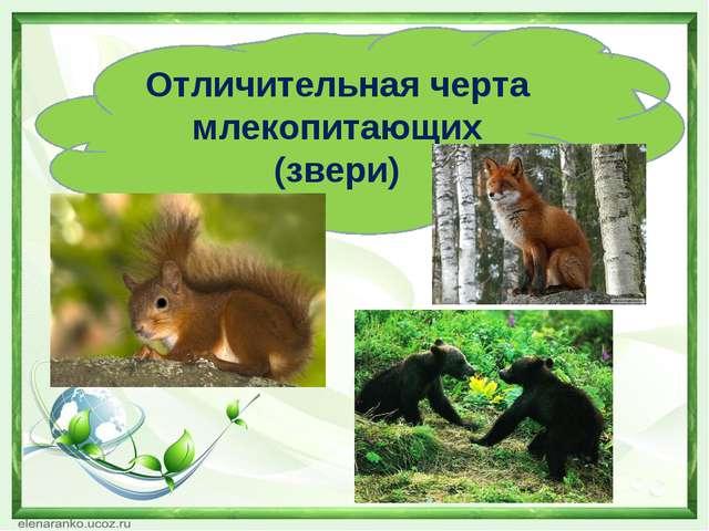 Отличительная черта млекопитающих (звери)