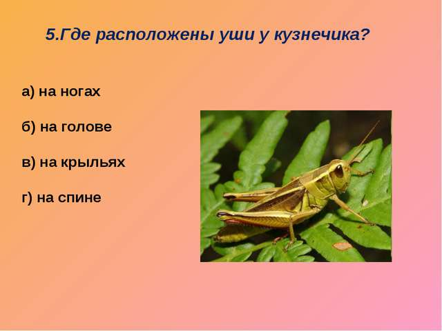 5.Где расположены уши у кузнечика? а) на ногах б) на голове в) на крыльях г)...