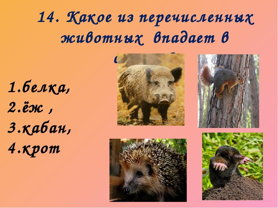 14. Какое из перечисленных животных впадает в спячку? 1.белка, 2.ёж , 3.кабан...