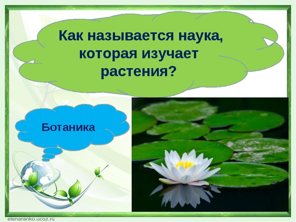 Как называется наука, которая изучает растения? Ботаника