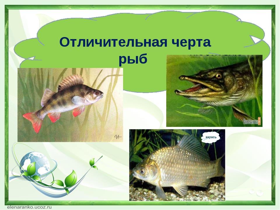 Отличительная черта рыб