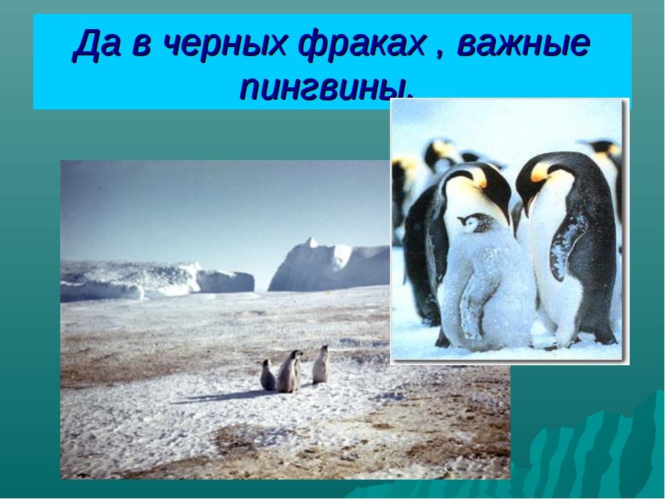 Да в черных фраках , важные пингвины.