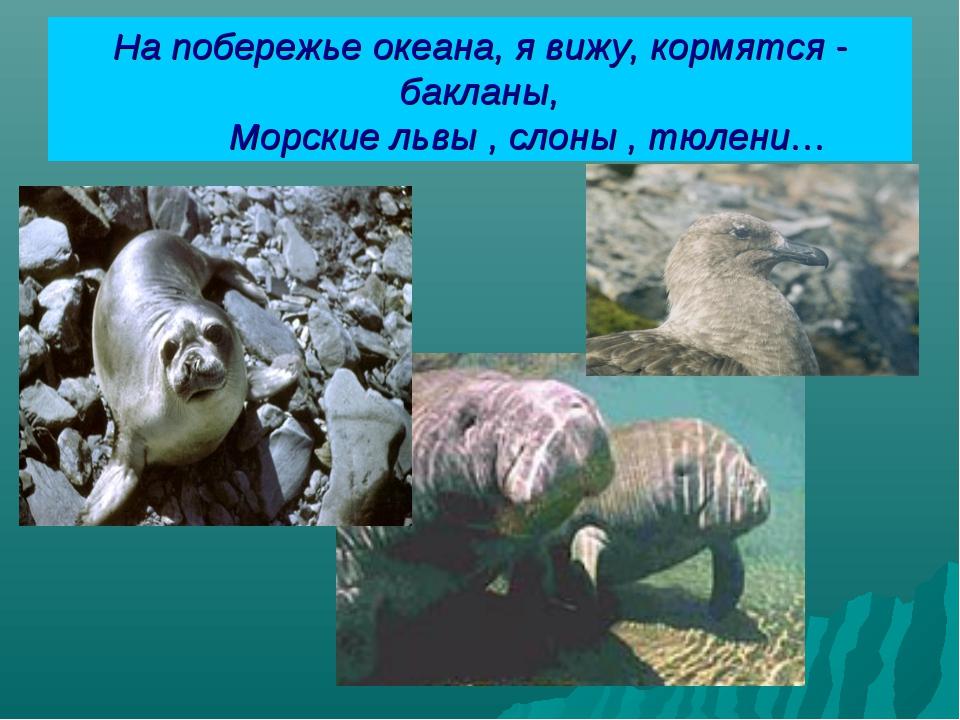 На побережье океана, я вижу, кормятся - бакланы, Морские львы , слоны , тюле...