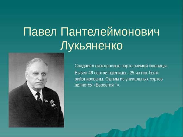 Павел Пантелеймонович Лукьяненко Создавал низкорослые сорта озимой пшеницы. В...
