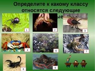 Определите к какому классу относятся следующие животные. 1 2 3 4 6 7 8 9