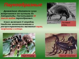 Паукообразные Древнейшие обитатели суши встречаются от пустынь до Антарктиды.