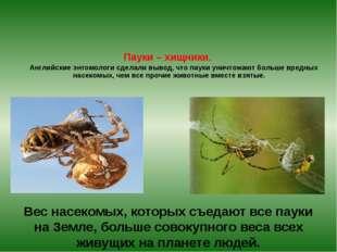 Пауки – хищники. Английские энтомологи сделали вывод, что пауки уничтожают б