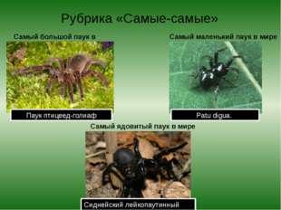 Рубрика «Самые-самые» Самый большой паук в мире Паук птицеед-голиаф Самый мал
