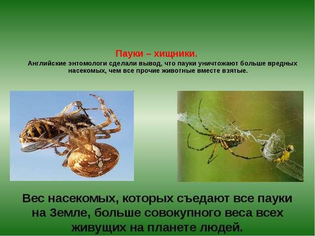 Пауки – хищники. Английские энтомологи сделали вывод, что пауки уничтожают б...