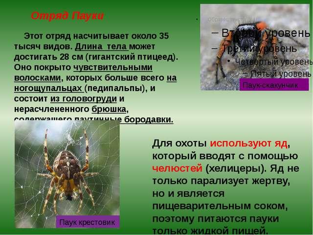 Отряд Пауки Этот отряд насчитывает около 35 тысяч видов. Длина тела может дос...
