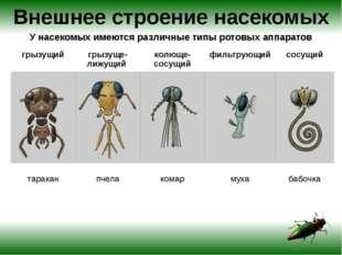 Внешнее строение насекомых У насекомых имеются различные типы ротовых аппарат