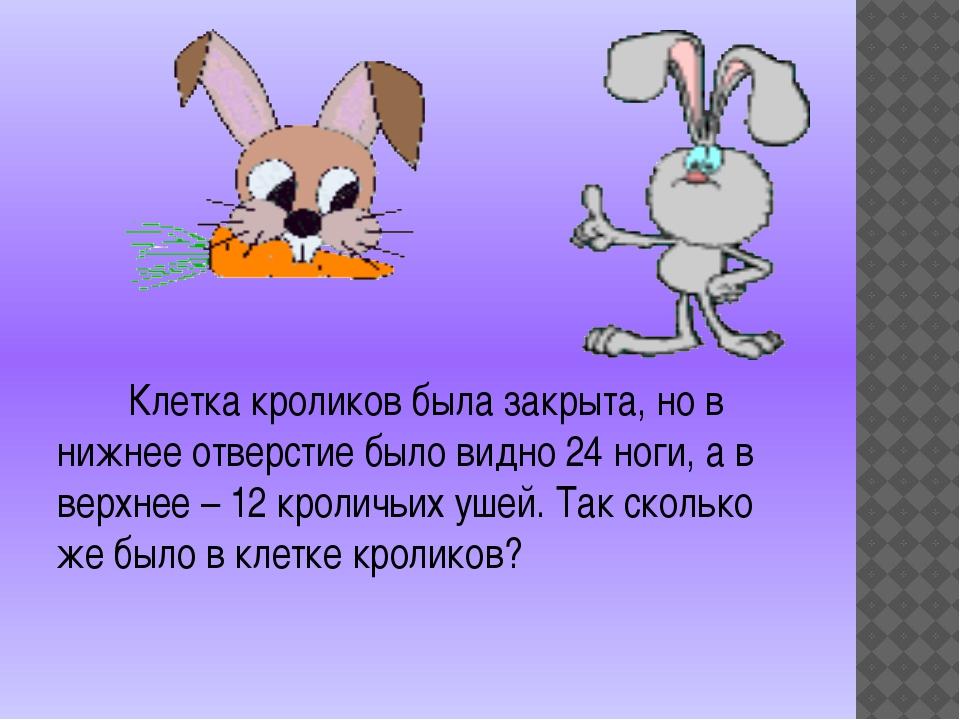 Клетка кроликов была закрыта, но в нижнее отверстие было видно 24 ноги, а в...