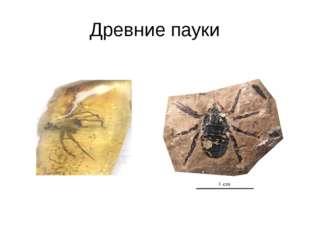 Древние пауки