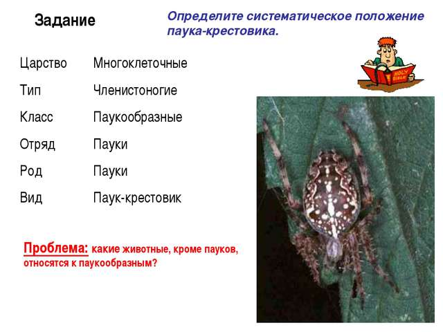 Задание Определите систематическое положение паука-крестовика. Проблема: каки...