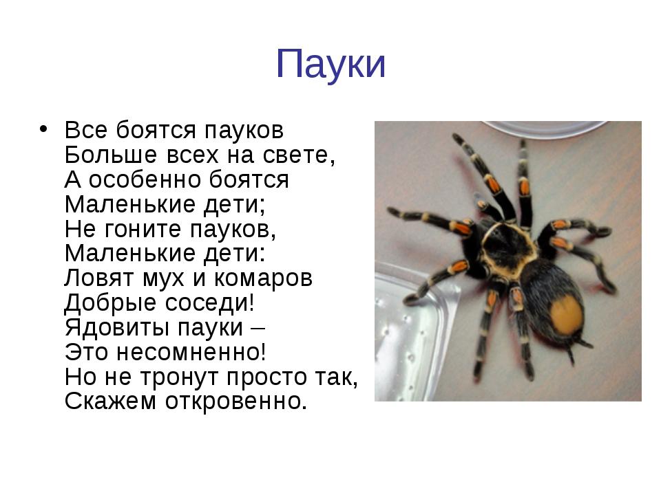 Пауки Все боятся пауков Больше всех на свете, А особенно боятся Маленькие дет...