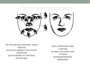 На этом рисунке показано, каким образом, используя ширину глаза, можно опреде