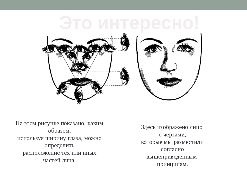 На этом рисунке показано, каким образом, используя ширину глаза, можно опреде...