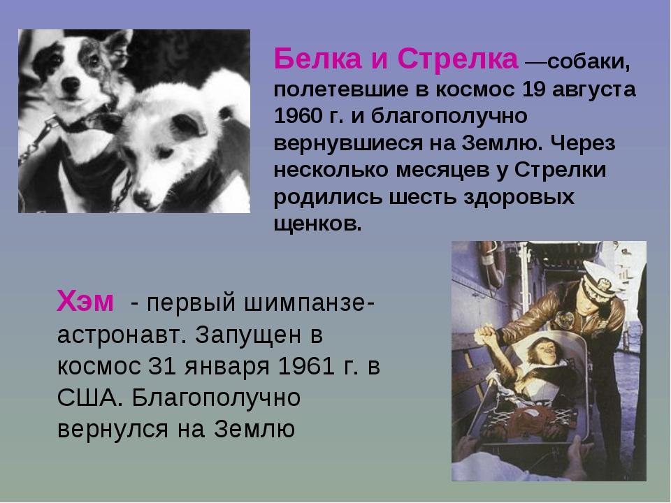 Белка и Стрелка —собаки, полетевшие в космос 19 августа 1960 г. и благополучн...