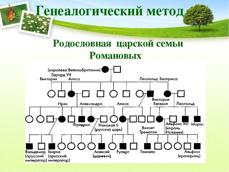 Родословная царской семьи Романовых Генеалогический метод