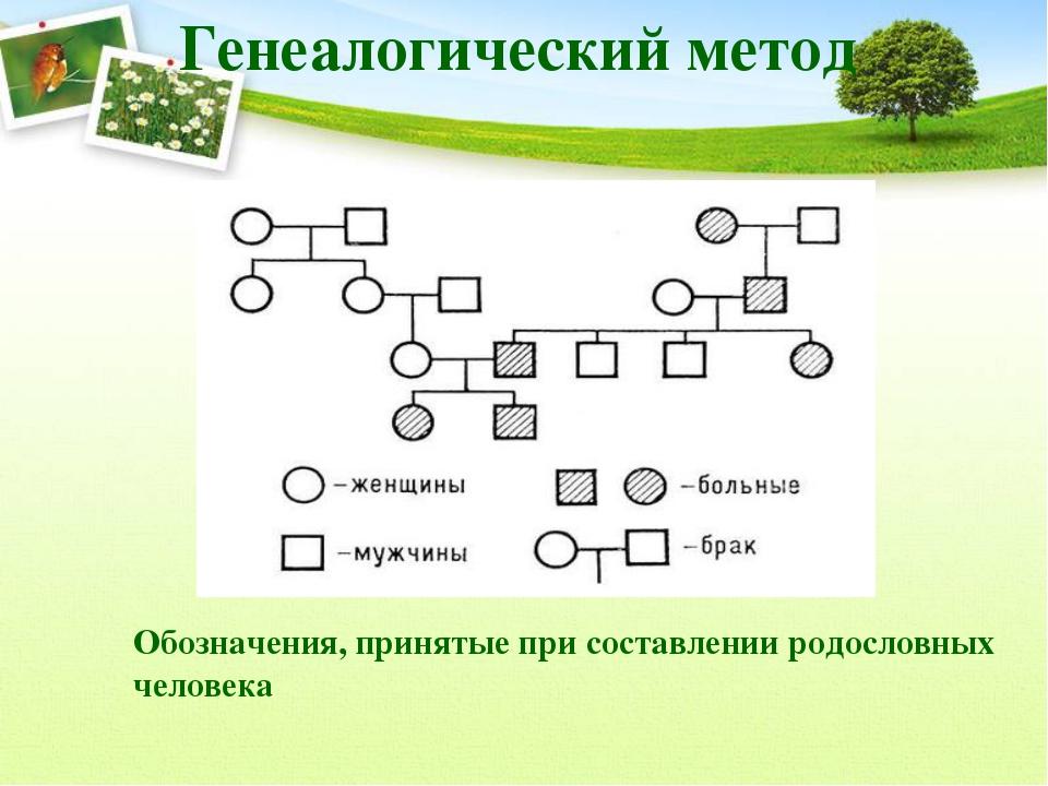 Генеалогический метод Обозначения, принятые при составлении родословных челов...