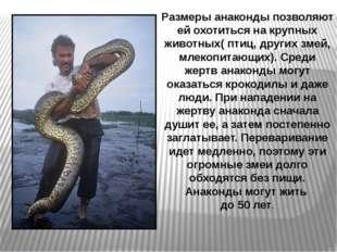 Размеры анаконды позволяют ей охотиться на крупных животных( птиц, других зме