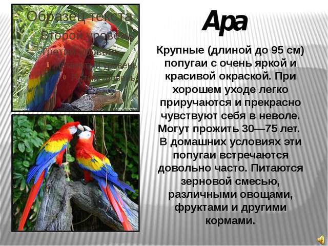 Ара Крупные (длиной до 95 см) попугаи с очень яркой и красивой окраской. При...