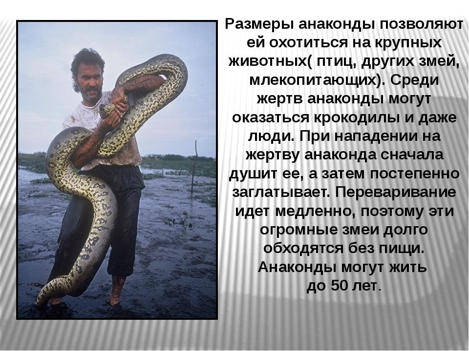 Размеры анаконды позволяют ей охотиться на крупных животных( птиц, других зме...