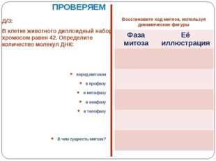 Д/З: В клетке животного диплоидный набор хромосом равен 42. Определите количе