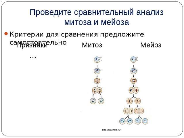 Проведите сравнительный анализ митоза и мейоза Критерии для сравнения предлож...