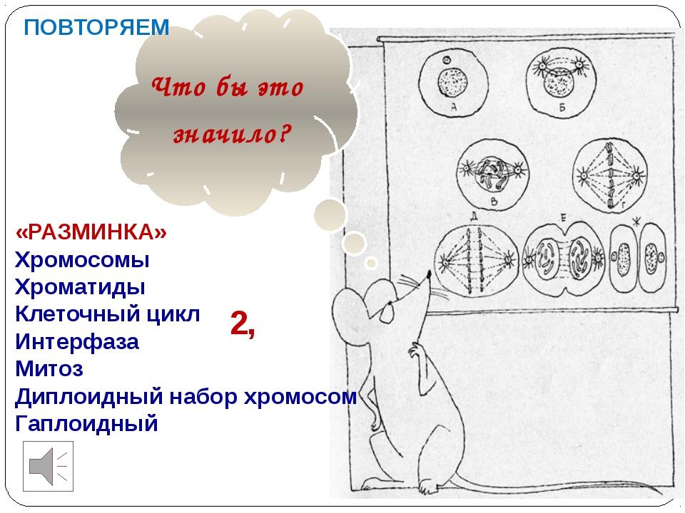 Что бы это значило? ПОВТОРЯЕМ «РАЗМИНКА» Хромосомы Хроматиды Клеточный цикл...