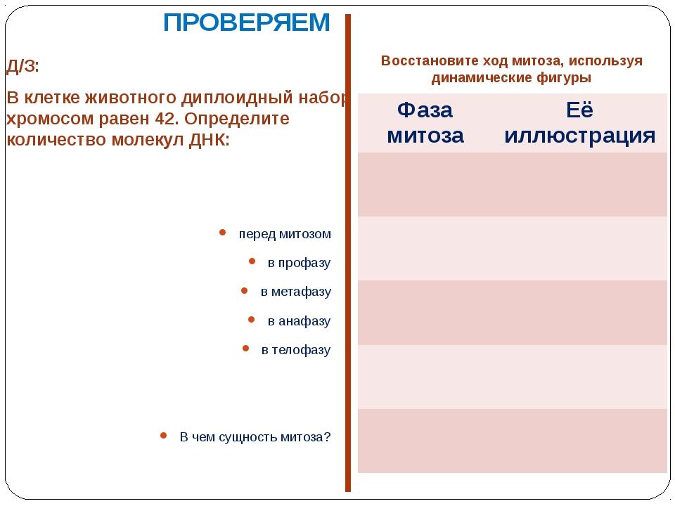 Д/З: В клетке животного диплоидный набор хромосом равен 42. Определите количе...