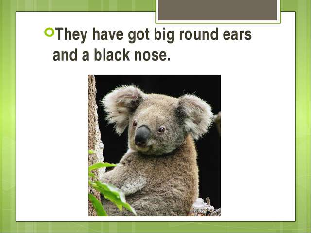 They have got big round ears and a black nose.