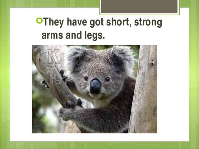 They have got short, strong arms and legs.