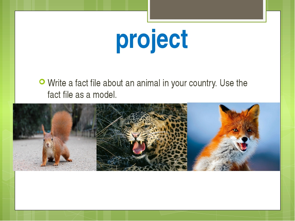 project Write a fact file about an animal in your country. Use the fact file...