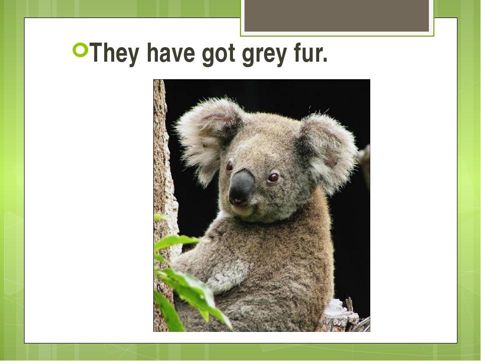 They have got grey fur.