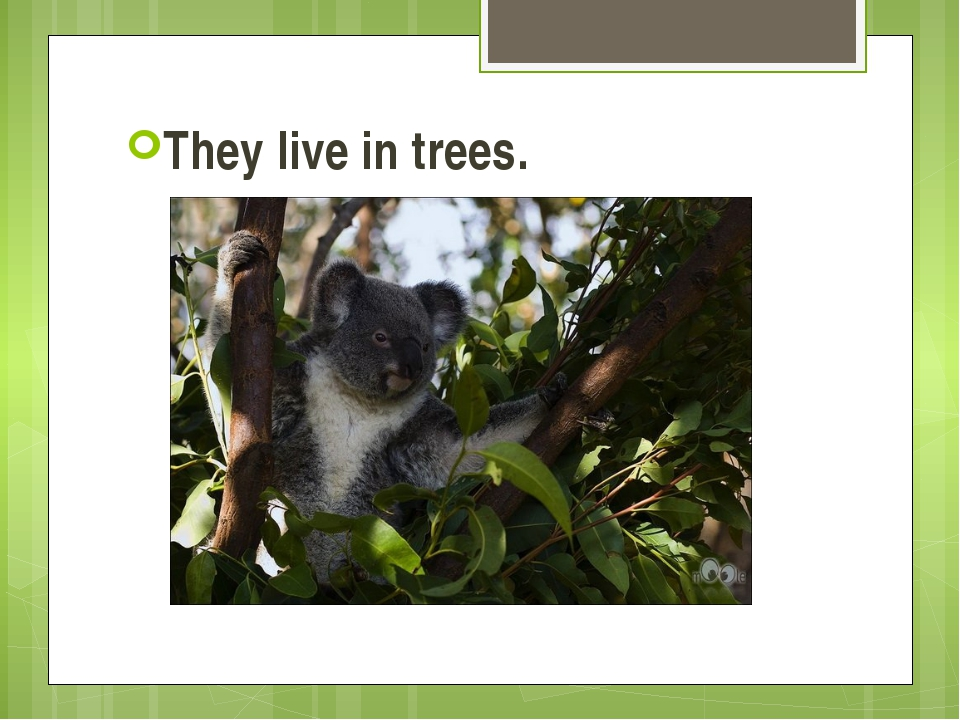 They live in trees.