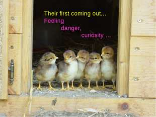 Their first coming out… Feeling danger, curiosity …