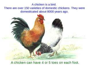 A chicken is a bird. There are over 150 varieties of domestic chickens. They