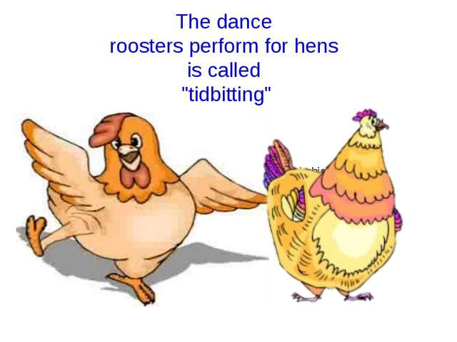 fear of chickens is called Alektorophobia? The dance roosters perform for hen...