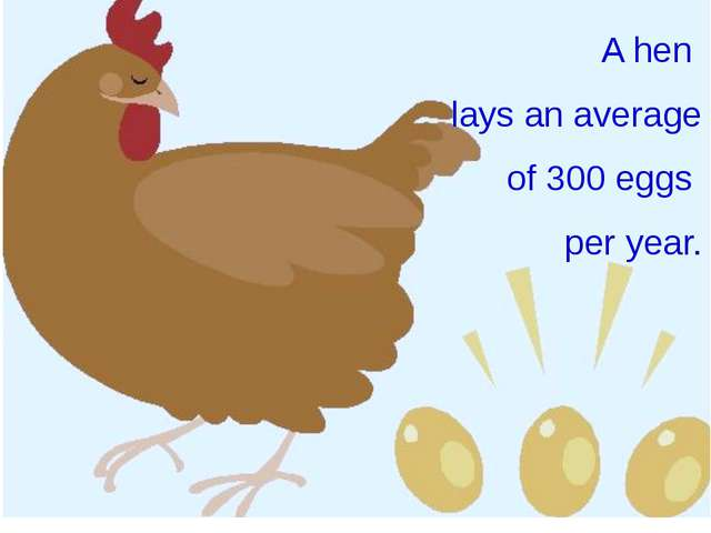 A hen lays an average of 300 eggs per year.