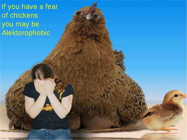 If you have a fear of chickens you may be Alektorophobic