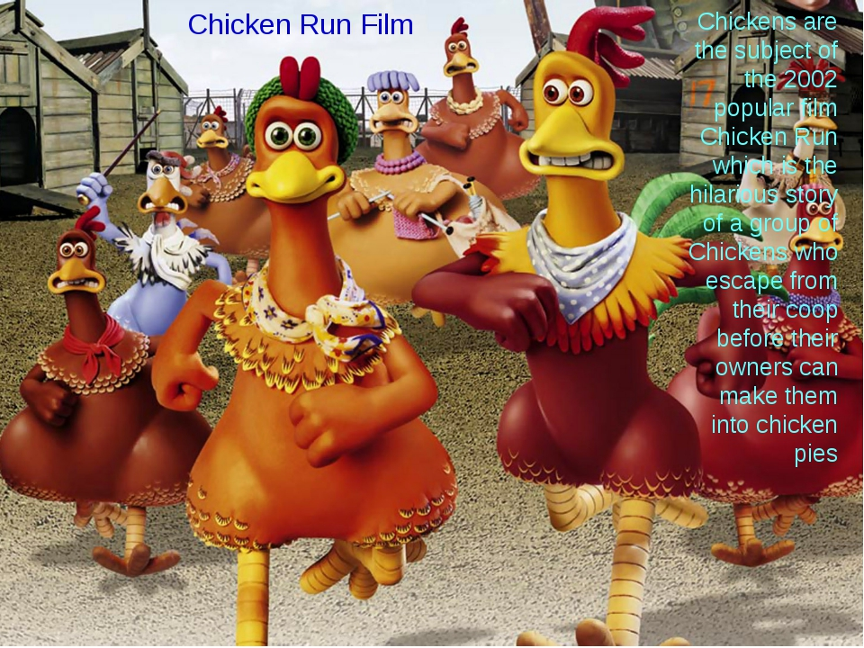 Chickens are the subject of the 2002 popular film Chicken Run which is the hi...
