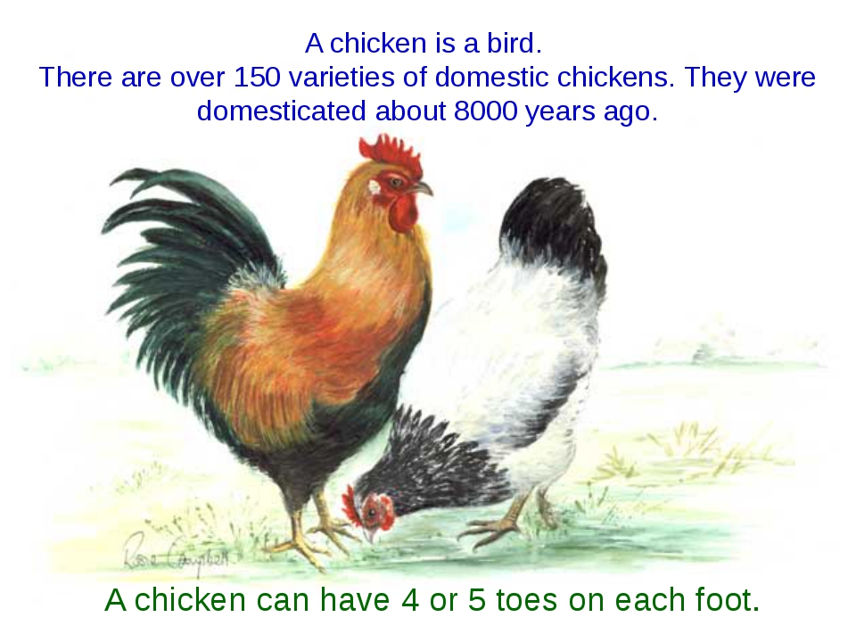 A chicken is a bird. There are over 150 varieties of domestic chickens. They...